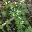 West Midlands, Solihull, Summer Wild Food Foraging Course/Walk image