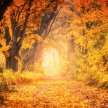 Autumn Equinox Meditation, Nature Connection, Seasonal Reflection and Self-Inquiry image
