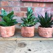 Make Your Own Terracotta Planter (with BYOB) image