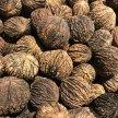 New York Nut Growers Association 2021 Fall Meeting image