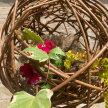 Botanical Sphere Workshop image