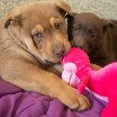 Puppy Preschool with Angela & Lowell image