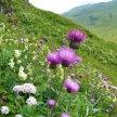 Scottish Botanists' Conference 2021 image