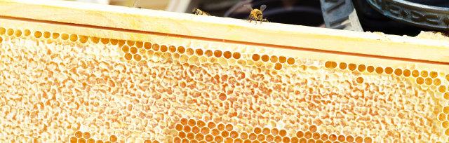 Ayr Beekeepers 2021 Honey Show