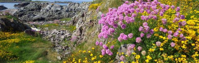 Scottish Botanists' Conference 2020