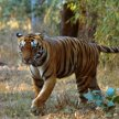 North & Central India - Tigers & Dolphins with Ian & Sally Hunter image