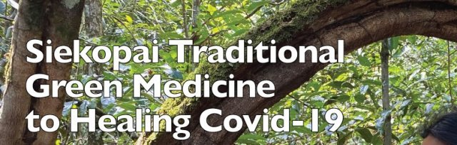 Siekopai Traditional Green Medicine to heal Covid-19