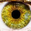 The Eye image