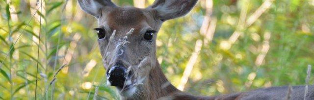 Deer Resistant Gardening Workshop