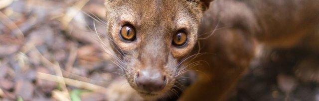 Ventura Wildlife Foundation Members Taster Day
