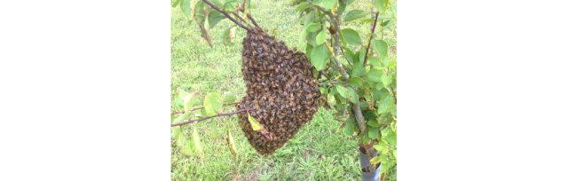 Swarm Control short course