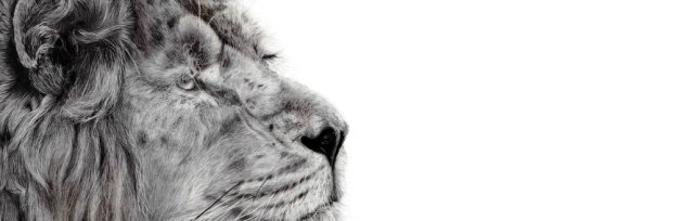 WILDLIFE PENCIL DRAWING COURSE with artist Alannah Barker.