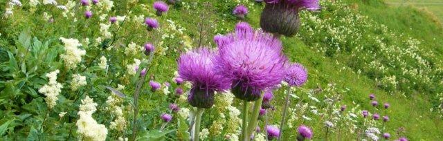Scottish Botanists' Conference 2021