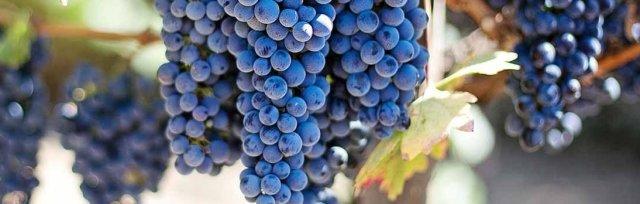 Wine & Spirits Education Trust (WSET) Online Level 2 Award in Wine -  New England Wine Academy