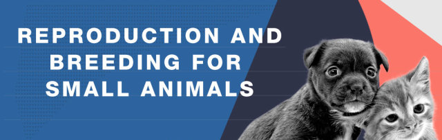 Reproduction and Breeding for Small Animals
