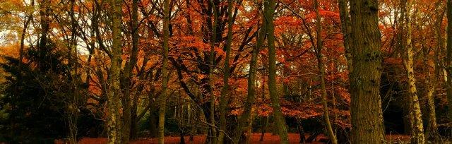 Norfolk Tremendous Trees Course/Walk
