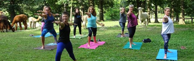 Flow-Paca Yoga