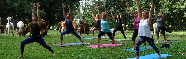Hatha-Paca Yoga