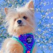 THE WELLNESS & WONDERFUL EXPERIENCE - For Pups & Paw'rents image