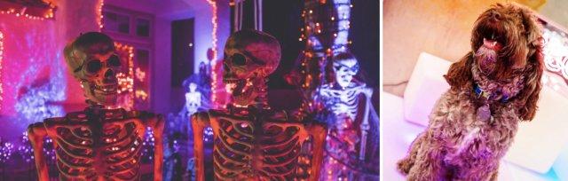 Cockapoo Cafe London - Halloween Spookfest