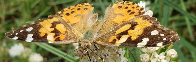 Cochise County Edition: Top 20 Native Plants for Pollinators