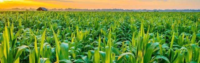 Crops, Seeds & Soil Tech (CSS) 4.0 2021