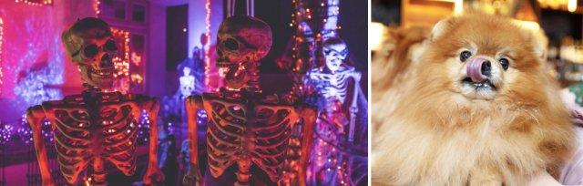 Pom Cafe London - Halloween 2021