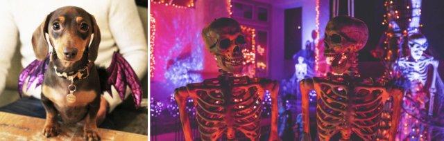 Dachshund Cafe London - Halloween Spookfest