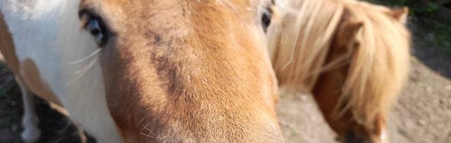 Pony Care Experience on the Farm at Jarrow Hall Fri 3rd September