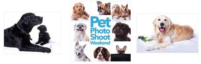 Pet Photo Shoot Weekend