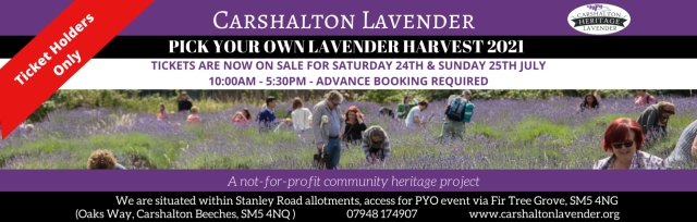 Carshalton Lavender Pick Your Own Harvest