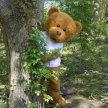 Teddy bear's picnic at Monkton image