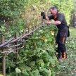 Hedgelaying Training Course image