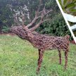Willow Weave a Reindeer with Sarah Edwards - £74 image