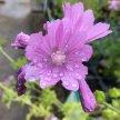 Nottinghamshire, Nottingham, Summer Wild Food Foraging Course/Walk image