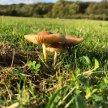 Norfolk, Hunstanton, Summer Wild Food Foraging Course/Walk image