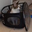 Cat Rescue image