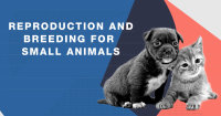 Reproduction and Breeding for Small Animals image