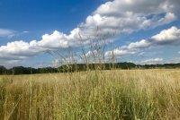 Prairie Management & Restoration Tools Workshop image