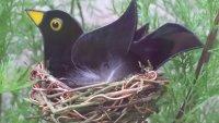 Copper Foil Nesting Birds with Caroline Lambert - £74 image